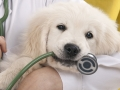 Proper pet care – selecting the right vet