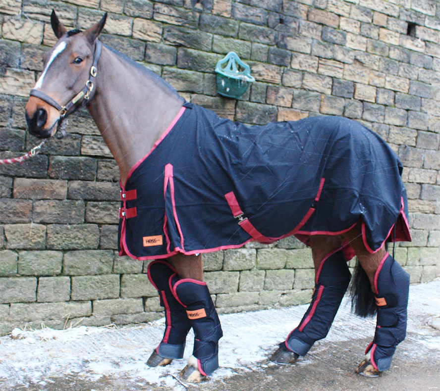 Travelling gear you need for transporting your horse